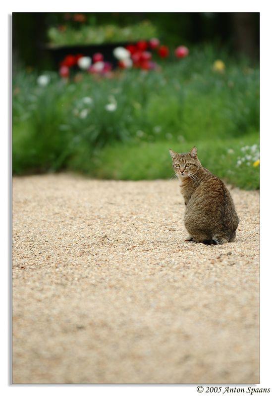 4. Le Chat