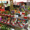 Many colourful cacti at this stall.