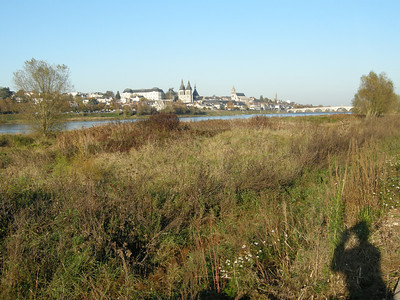 Banks of the Loire, south side. Lots of bird life in the grasses along the bank.
