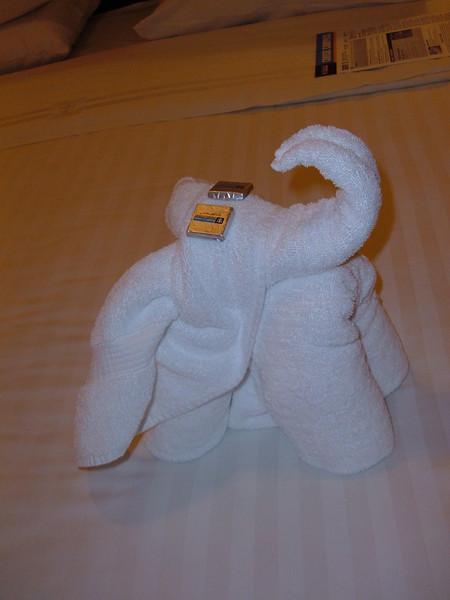 an elephant tonight