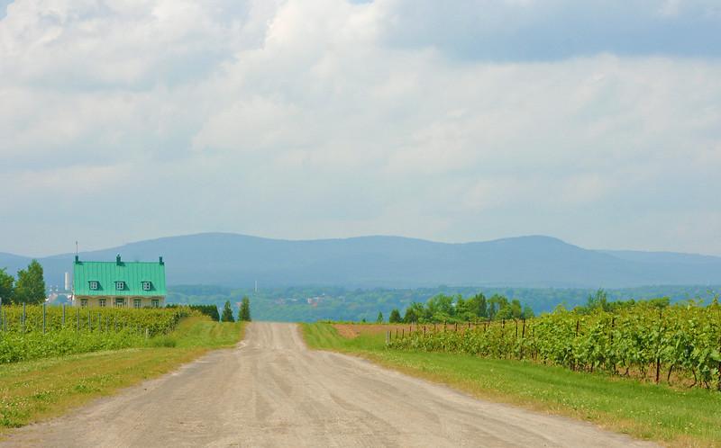 Lonely Vinyard Road