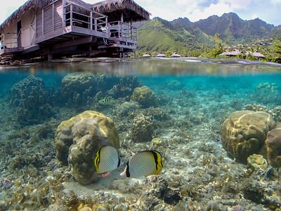 French Polynesia--2017