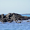 Notice the sleeping sea lions on the right side of the lava rock island?