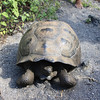 Tortoise on the trail.