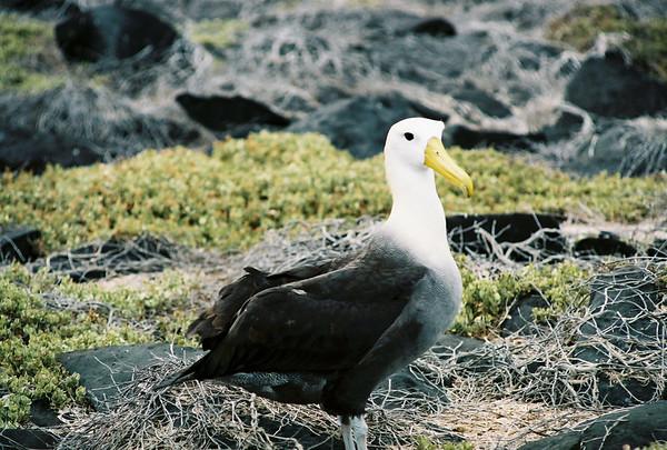 Galapagos Wildlife & Scenery