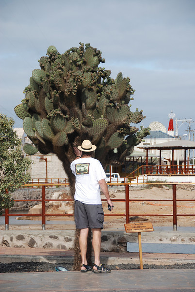 Tim is standing in front of a cactus tree.  I wanted to show you the scale of the trees.