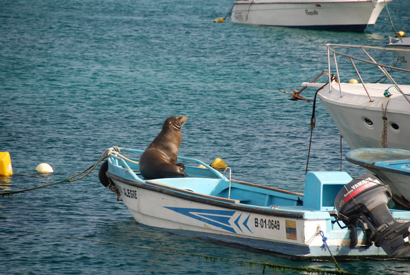 The Sea Lions sunbathe wherever they want.  This was a boat in the harbor.