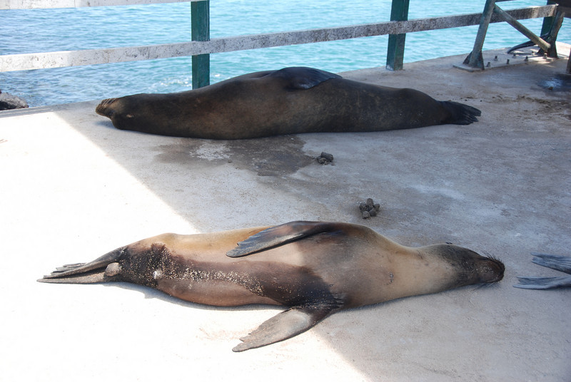Sea Lions napping everywhere