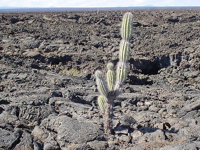 The Galapagos Islands were formed by volcanoes (similar to Hawaii), but are more arid.