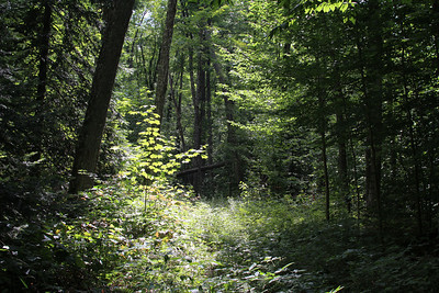 On the way up to Balm of Gilead