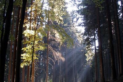 Wald Wanderung bei (Forest hike near) Nentershausen, (Nordhessen) 2005