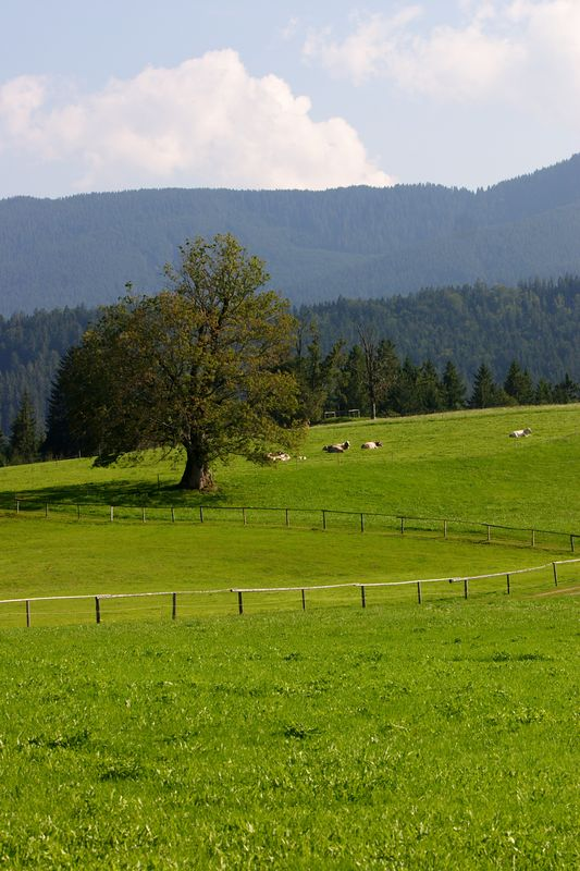 Pasture outside Weiskirche