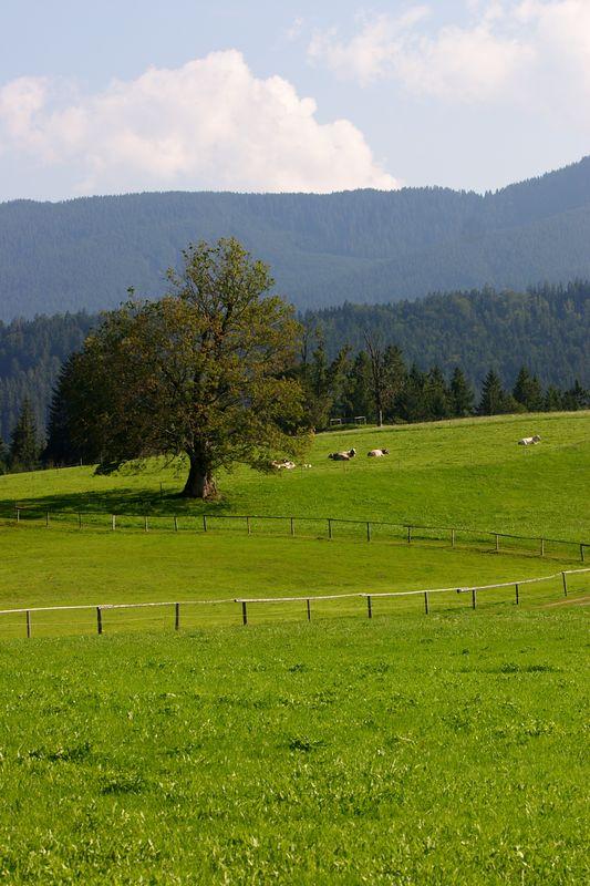 Pasture outside Weiskirche