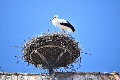 On top of the tower at the town gate, was a huge stork nest with two storks living there.  They were believed to bring good luck to the residents of the houses on which they built their nests,