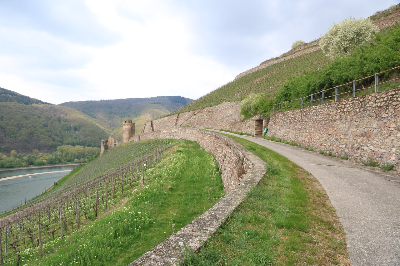 The narrow roadway through the vineyards to Burg Ehrenfels.