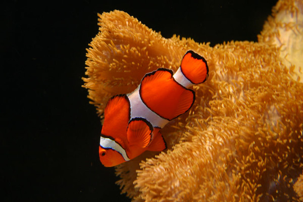 Nemo - I found him.  This exhibit actually had two clown fish and a Dory fish.  The kids loved it.