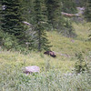 That's a bear! It was on the edge of the campground.