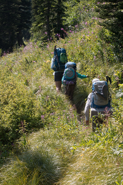 Heading up to our next campground - and picking huckleberries along the way