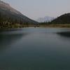 Moose in Thunder Pond