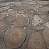 Stromatolites in the rock