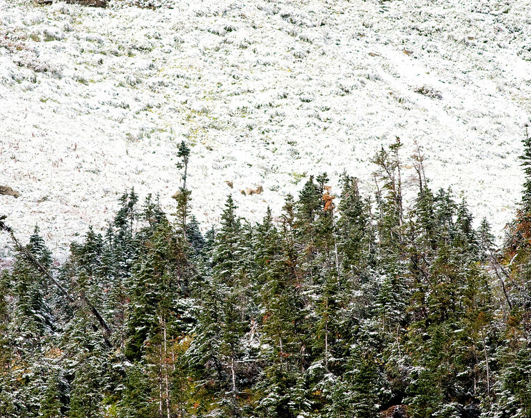 Can you find the 2 big horn sheep?