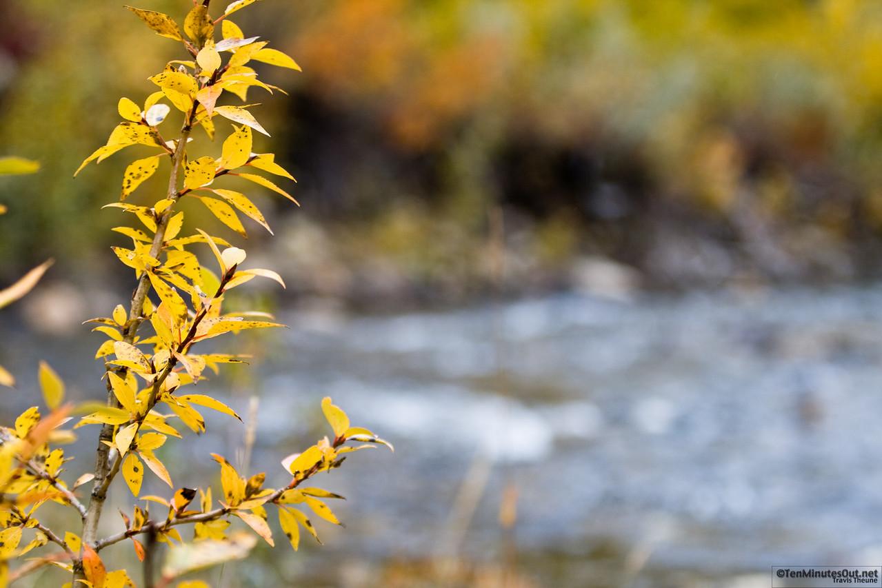 Mini-tree on the river