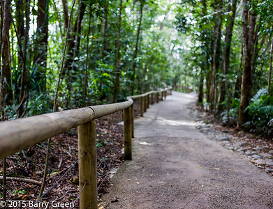 20150125_skyrail_rainforest_cairns_aus_0111
