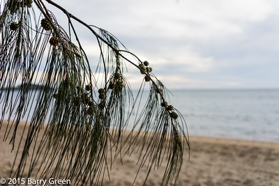 20150126_reef_house_palm_cove_aus_0014