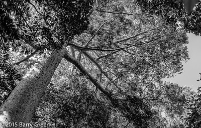 20150125_skyrail_rainforest_cairns_aus_0034