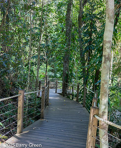 20150125_skyrail_rainforest_cairns_aus_0017
