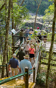 20150125_skyrail_rainforest_cairns_aus_0090