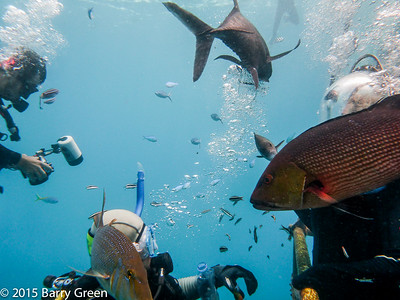 The Great Barrier Reef - Jan 26, 2015