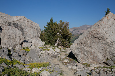 Death Canyon Shelf