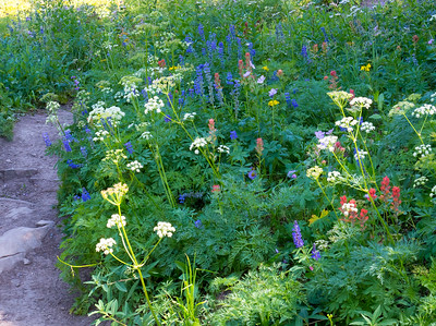 Seems like around every corner we are surprised by an even more spectacular wild flower array