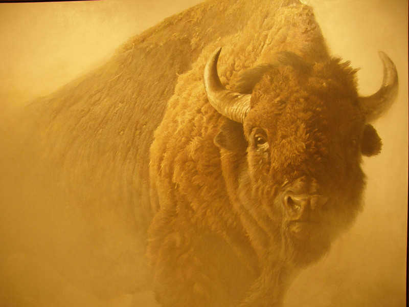 Buffalo by Robert Bateman. Both Guy and I have copies of this hanging on our walls at home.