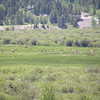 View from our room, this heard of Pronghorns were in the pasture most of the day.