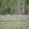 In this photo the Bear is in front of the Pronghorn.