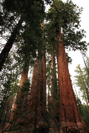 Grant Grove and Boole Tree Trail Hike