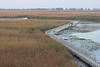 October 9, 2011 (Point Pelee National Park [Point Pelee Boardwalk] / Essex County, Ontario) - Boardwalk as viewed from tower