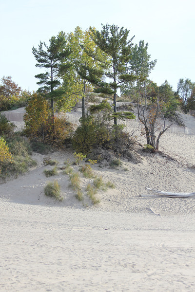 October 7, 2011 (Indiana Dunes State Park [West Beach] / Porter County, Indiana) - Sand dunes