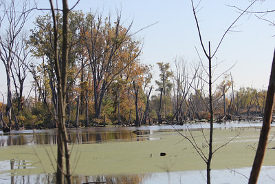 October 8, 2011 (Indiana Dunes National Lakeshore [Great Marsh - Broadway Drive] / Porter County, Indiana) - Geese & Ducks on far shore of the Great Marsh
