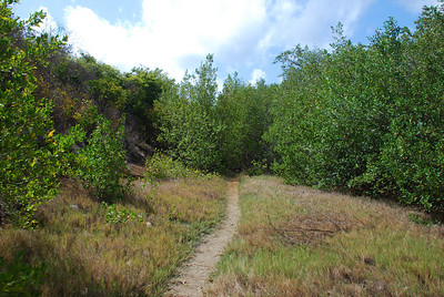 Grenada_La Sagesse - Hiking