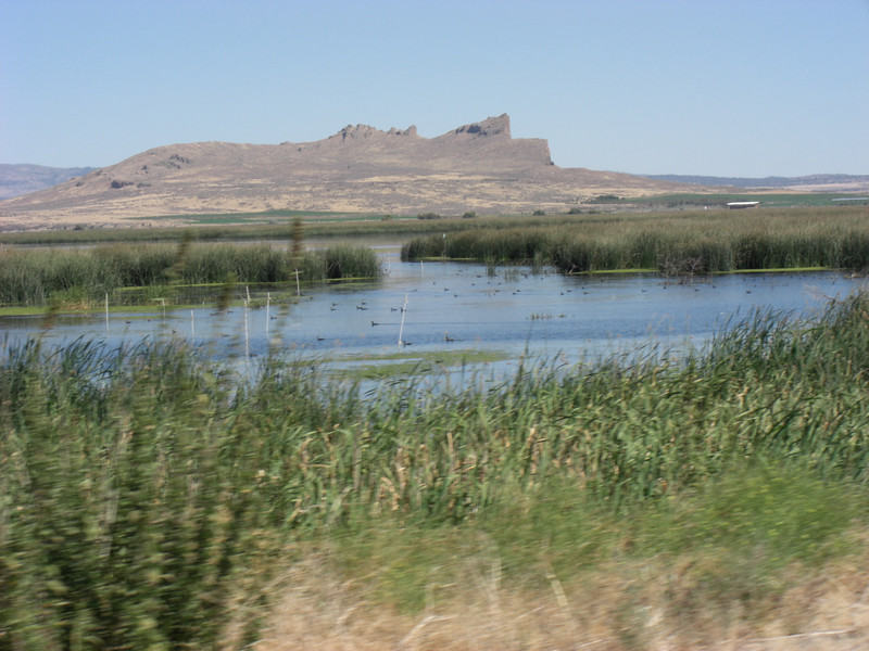 as we exit the lava beds, tule wildlife refuge is immediately on the north edge of the beds (of course!)