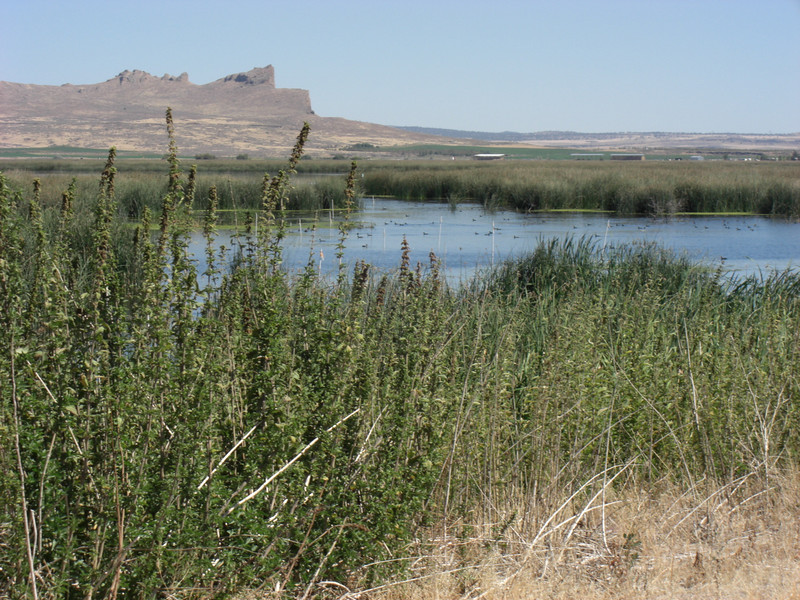 tule wildlife refuge