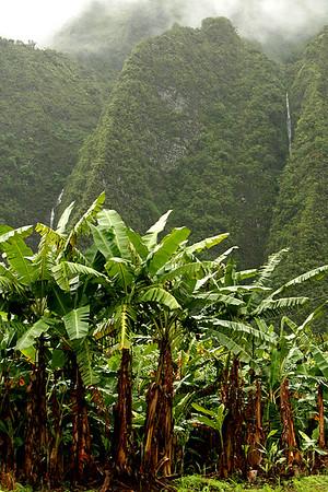 HAWAII - O'AHU - Waterfalls