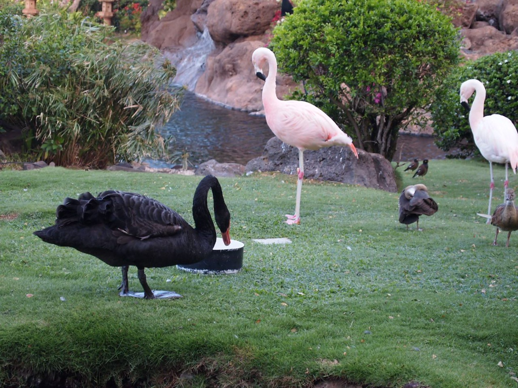 For lack of a better word, a swan garden. There were about 6 or so swans (one black one), some ducks, and some flamingos walking around in a garden 9 stories down below our hotel room.
