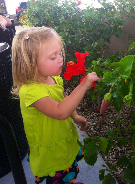 October 16, 2013 - (Enterprise Car Rental / Kona International Airport, Kona-Kailua, Hawaii County, Hawaii) -- Ada stopping to smell the flowers