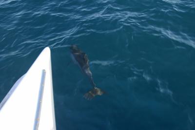 Kauai - Boat Trip