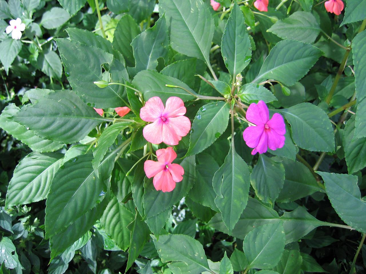 Flower in Waimea Valley