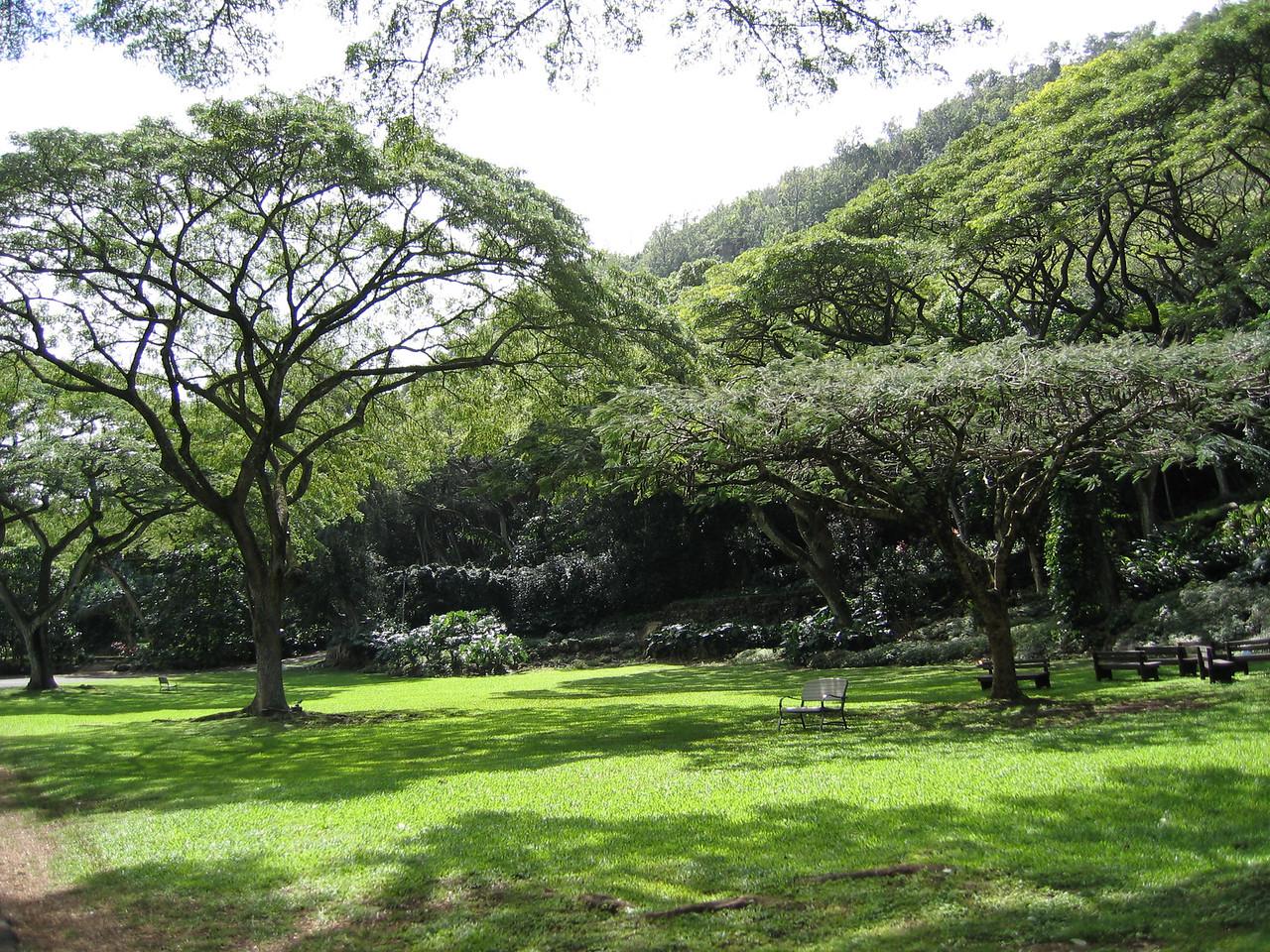 Meadow in Waimea Valley